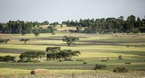Campi e case dell'azienda agricola in Etiopia Immagine Stock Libera da Diritti
