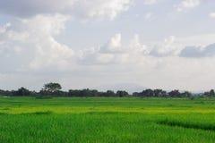 Campi e cielo verdi, sfondo naturale Immagini Stock Libere da Diritti