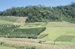 Campi e disboscamento coltivati nel Brasile del sud Immagine Stock