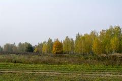 Campi e foreste nella caduta in Russia centrale - gialla, inchiostro verde e arancio Immagini Stock