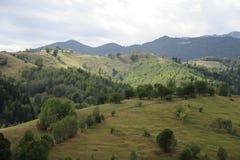 Campi e foreste verdi Immagini Stock Libere da Diritti