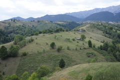 Campi e foreste verdi Immagine Stock