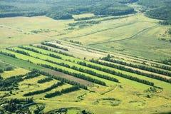 Campi e legno verdi Immagini Stock