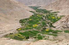 Campi e meadwos di Ladakhi immagini stock libere da diritti