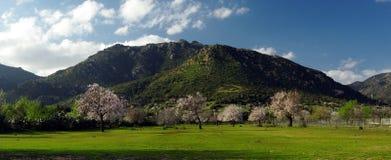 Campi e montagne verdi fioriti degli alberi fotografia stock libera da diritti