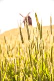 Campi e mulino a vento di grano Fotografia Stock Libera da Diritti