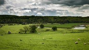 Campi e pecore verdi di pascolo sul lasso di tempo britannico della campagna stock footage
