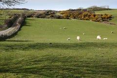 Campi e strada costiera su Anglesey, Galles Fotografia Stock Libera da Diritti