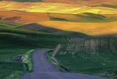 Campi e strada di frumento di Palouse immagini stock libere da diritti