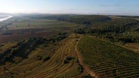 Campi e vigne verdi, vista aerea dal fuco video d archivio