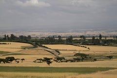 Campi ed agricoltura di grano in Etiopia Immagini Stock Libere da Diritti