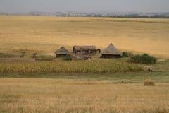Campi ed agricoltura di grano in Etiopia Fotografie Stock Libere da Diritti