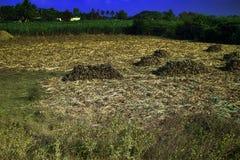 Campi ed agricoltura in India nell'inverno Fotografie Stock