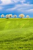 Campi ed alberi Fotografia Stock Libera da Diritti