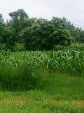 Campi ed alberi verdi Fotografia Stock Libera da Diritti