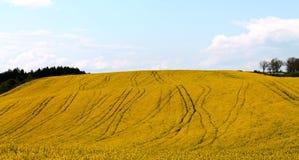 Campi gialli Fotografia Stock