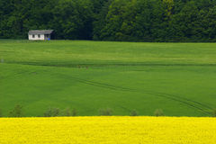 Campi gialli e verdi fotografia stock