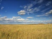 Campi gialli sotto un cielo blu drammatico con le nuvole bianche vicine la colonia del greco antico di Histria, sulle rive di Mar Fotografia Stock Libera da Diritti