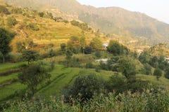 Campi graduali nella montagna dell'Himalaya Fotografia Stock Libera da Diritti