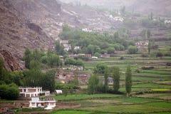 Campi in Ladakh, India Fotografie Stock Libere da Diritti