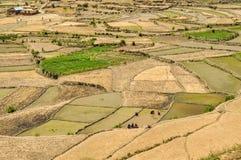 Campi nel Nepal Immagine Stock