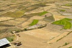 Campi nel Nepal Immagine Stock Libera da Diritti