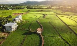 Campi nel paesaggio all'aperto della natura di Nan Thailand Fotografie Stock Libere da Diritti