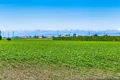campi nella valle di Po Immagini Stock Libere da Diritti