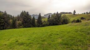 Campi nelle alpi svizzere Immagine Stock Libera da Diritti