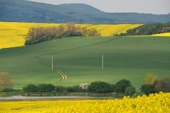 Campi ondulati di Moravian del sud, repubblica Ceca Fotografia Stock