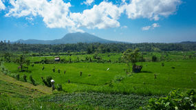 Campi verdi in Bali Fotografia Stock Libera da Diritti
