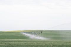 Campi verdi che sono irrigati Immagini Stock