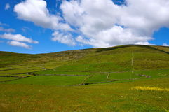 Campi verdi con il cielo nuvoloso blu Immagine Stock