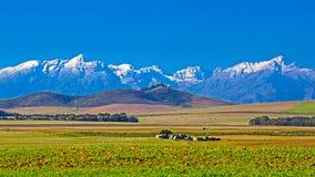Campi verdi con le montagne innevate distanti Immagine Stock Libera da Diritti