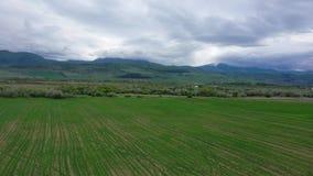 Campi verdi contro il contesto delle montagne e del cielo nuvoloso archivi video