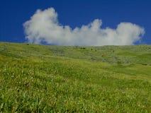Campi verdi del Altai Immagine Stock