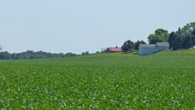 Campi verdi dell'azienda agricola Fotografia Stock Libera da Diritti