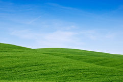 Campi verdi della Toscana Fotografia Stock