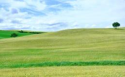 Campi verdi della Toscana, Italia Fotografie Stock