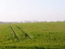 Campi verdi fertili nell'altezza della primavera Fotografia Stock