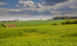Campi verdi nei wolds della Lincolnshire Fotografia Stock Libera da Diritti