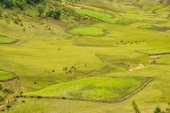 Campi verdi nel Nepal Immagini Stock
