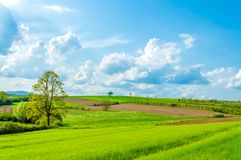 Campi verdi, regione della Croazia, Slavonia Fotografie Stock