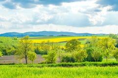 Campi verdi, regione della Croazia, Slavonia Immagine Stock