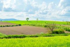 Campi verdi, regione della Croazia, Slavonia Fotografia Stock Libera da Diritti