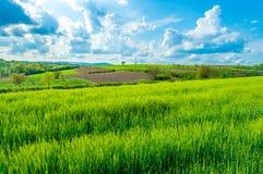 Campi verdi, regione della Croazia, Slavonia Fotografia Stock