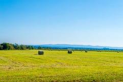 Campi verdi, regione della Croazia, Slavonia Fotografie Stock Libere da Diritti