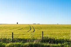 Campi verdi sotto un chiaro cielo blu Immagini Stock