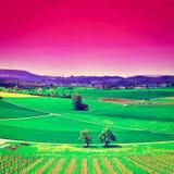Campi verdi in Svizzera Fotografia Stock