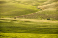 Campi verdi, Toscana, Italia Immagine Stock
